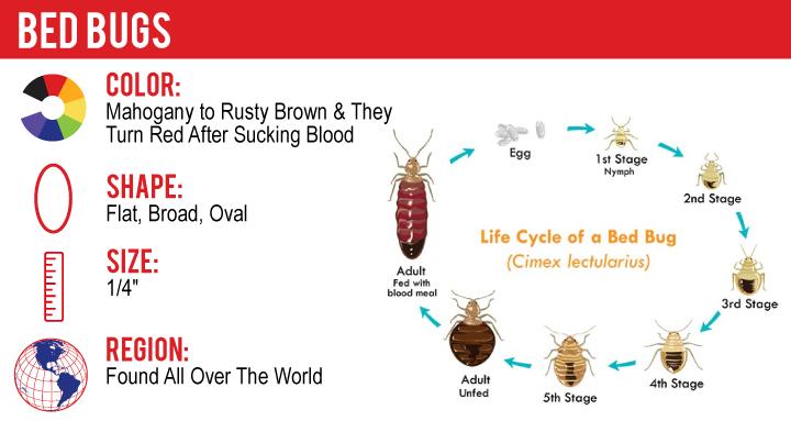 Bed Bugs Heat Treatments A D Professional Pest